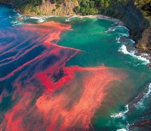 10 Kejadian Alam Yang Mungkin Agan Belum Ketahui